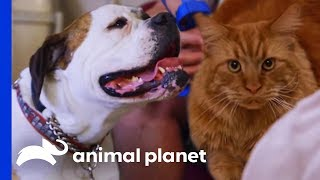 Dog Gets A Chance To Redeem Herself After 2 Years Living Outside | Cat vs. Dog