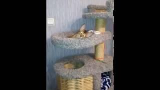 Абиссинская кошка и её большой дом! 🐈
