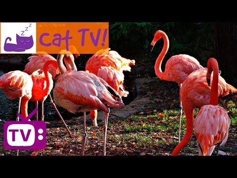 Cat TV  30 min of Beautiful Flamingos Combined with Soothing Music Engaging Visuals For Cats Ep 8