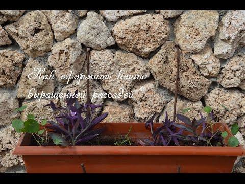 Кашпо.  Как посадить рассаду цветов в кашпо.
