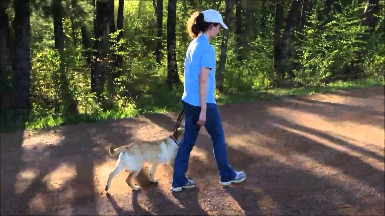 how to teach your dog to walk on a leash