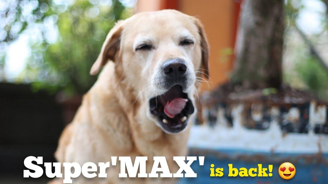 MAKKU sach mei superMAX hai 😍❤️   The Himalayan Husky
