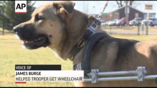Paralyzed Indiana Dog Gets Wheelchair