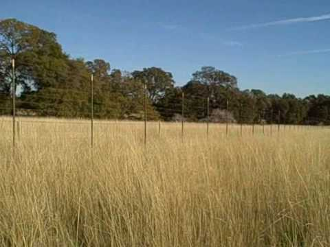 Native grassland restoration at the Audubon Bobcat Ranch