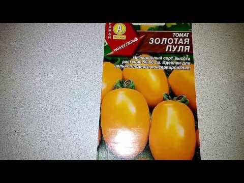 Ознакомление с томатом Золотая пуля