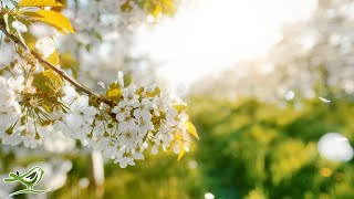 Download Beautiful Relaxing Music • Peaceful Piano, Cello & Guitar Music by Soothing Relaxation