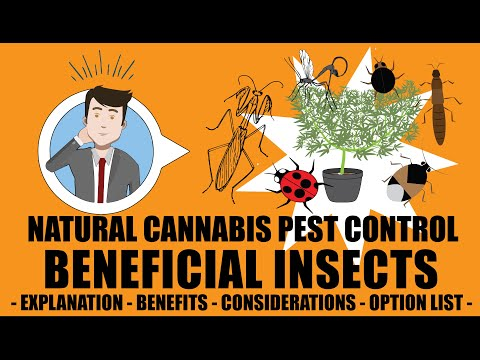 Cannabis Beneficial Insects - Organic Natural Weed Pest Control 101