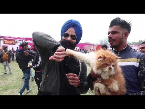 Was almost killed by a giant dog -Tibetan Mastiff at Patiala Dog show 2019