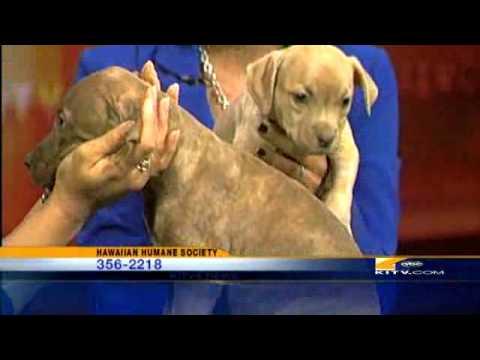 Pets On Set: Pitbull Puppies At The Humane Society