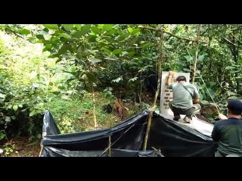 Sumatran Tiger translocation (August 2016)