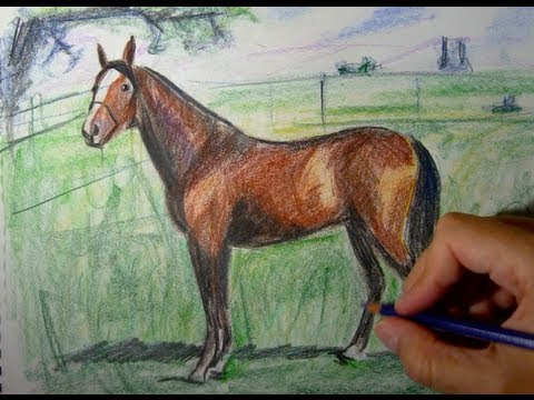 How to draw a horse with colored pencils   Things to Draw   YouTube