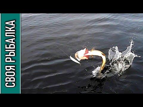 Щука на воблер, река Хотча. Отчёт о рыбалке за 13.10.2020
