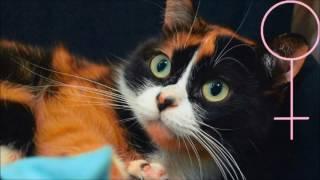 Раскрыт секрет кошки Куки с канала Сливки Шоу +Доказательства