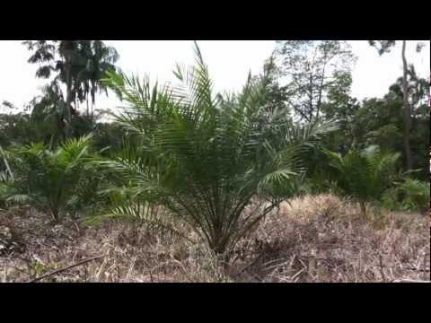 Green desert - Film HD