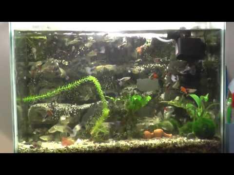 Мой аквариум 80 литров с гуппи (общага)