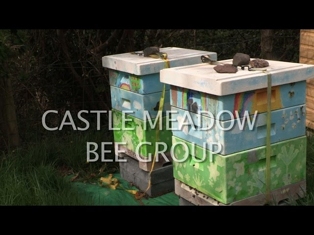 Castle Meadow Bee Group