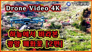 #92 광양 매화마을 [2편]#매화꽃축제#드론영상#Dr…