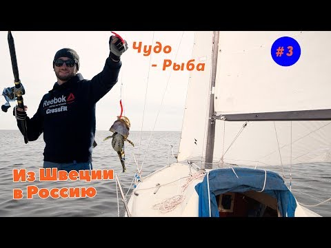 Приключения в Балтийском море на яхте. Поймали странную рыбу и Встретили остров нерп| ЧП в море