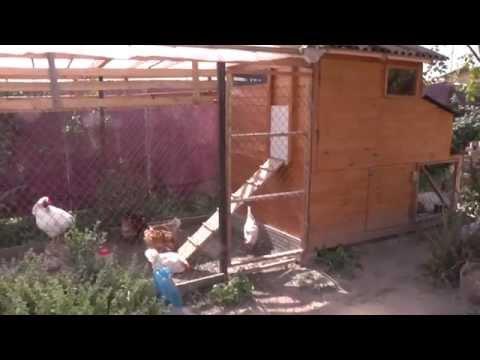 видео: Курятник своими руками. chicken house with their hands