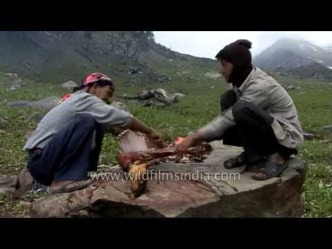 Nepalese porters prepare a sheep in a Himalayan meadow