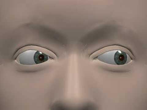 Eye Movement Terminology