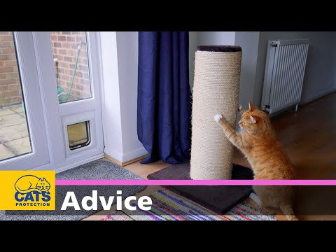 Creating The Best Home Environment For Your Cat 🐱🏠