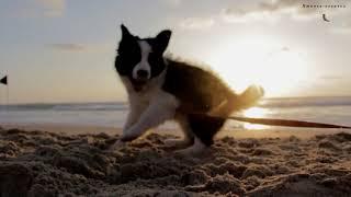 Видео для детей - Детские песни - Животные для детей -  Пропала собака по кличке Дружок