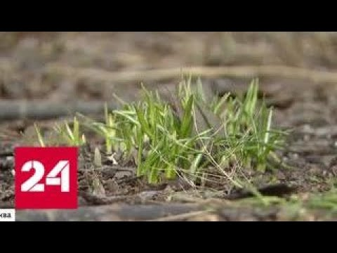 На термометрах цифры со знаком плюс: Москва готовится к настоящей весне - Россия 24