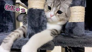 もち猫と本気で遊んでいたらこうなりました…笑