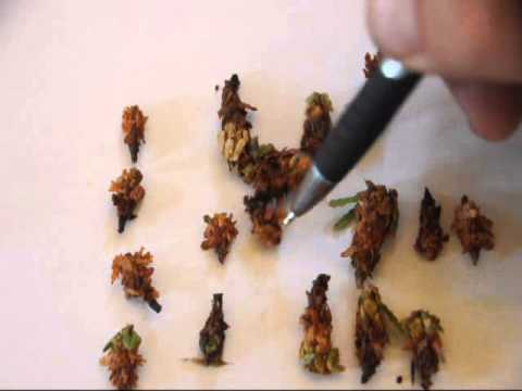 Decisions Decisions  To Kill Or Not To Kill    Bagworms  Cost Vs Value