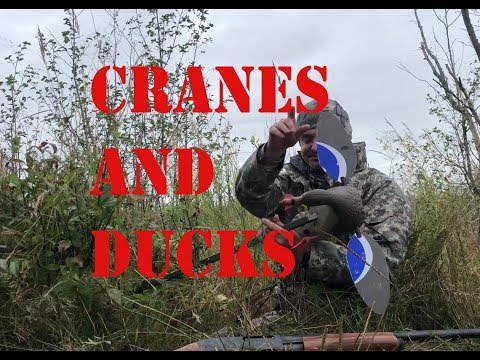 Early Season Duck And Crane Hunting In Alaska