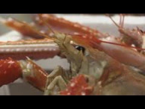 Scottish Fishermen Prepare For Post-Brexit Seas
