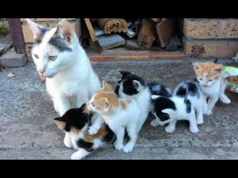 子猫のために自分は食べずに餌を与えてきた母猫。保護されて安心を手に入れるまで・・・。