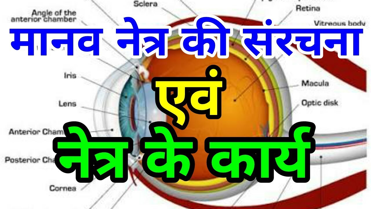 science gk l l human eye anatomy structure function in hindi l [ 1280 x 720 Pixel ]