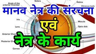 Science Gk l मानव नेत्र  और  उसकी संरचना  l Human Eye Anatomy - Structure & Function in hindi l
