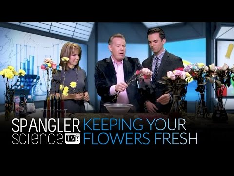 How to Keep Your Flowers Fresh - Best Recipes