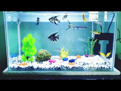 COMMUNITY AQUARIUM / Which Type Of Fish You Can Put Together