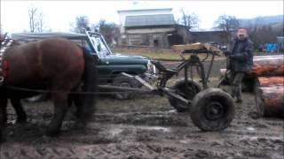 Konie zimnokrwiste w pracy