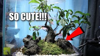 The Cutest Pet Ants In The World!