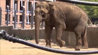 Мир животных. Слоны