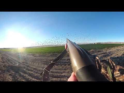 Jump Shooting Snow Geese in VR!