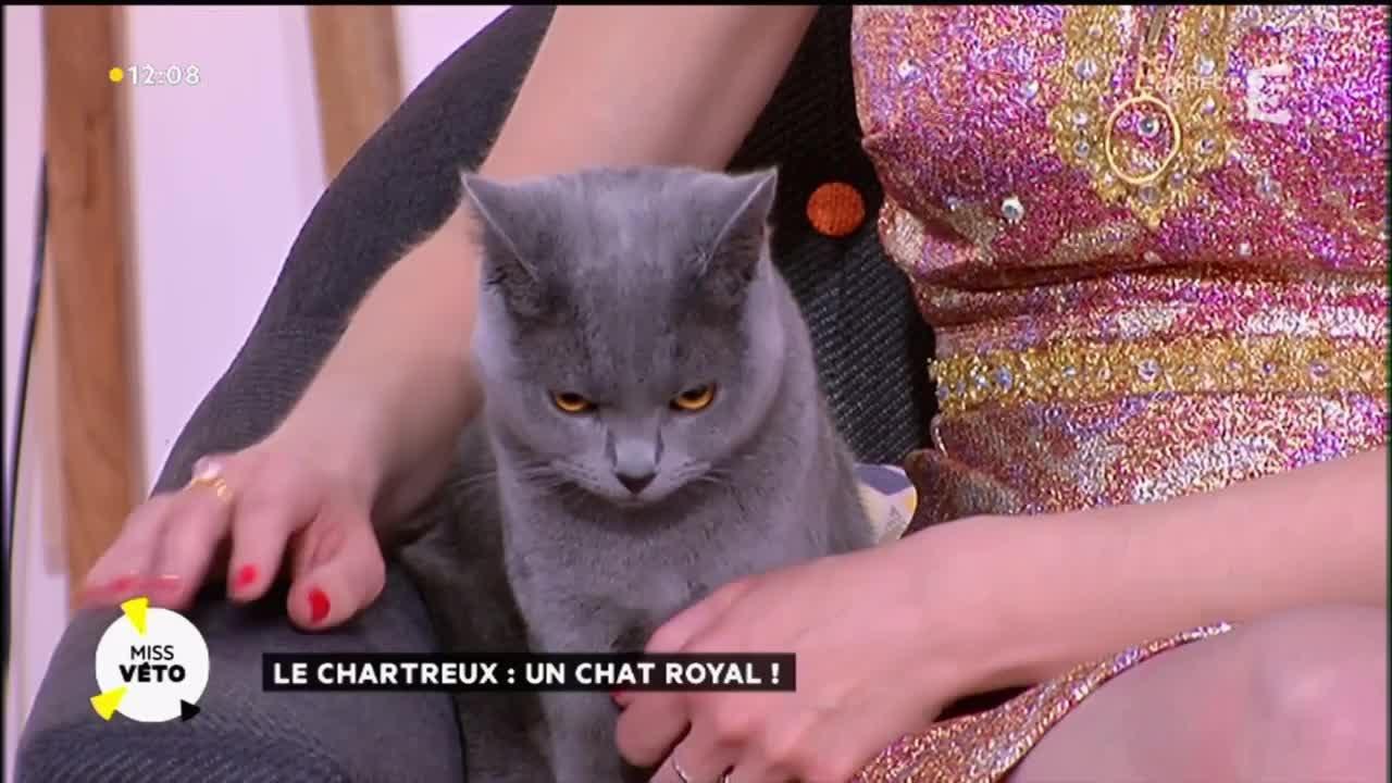 Chat maroc gratuit son inscription