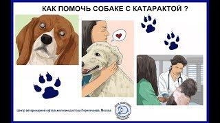 Как помочь собаке с катарактой