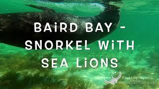 Baird Bay - Sea Lion snorkel