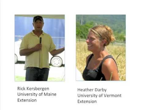 Organic Dairy Forages: Focus on Summer Annuals Webinar by eOrganic