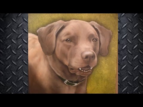 Chesapeake Bay Retriever Portrait