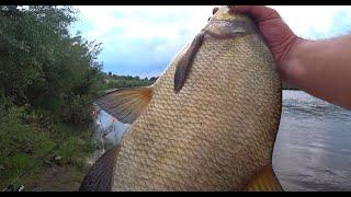 ЛОВЛЯ ЛЕЩА НА ДОНКИ Рыбалка на донки Рыбалка на Оке