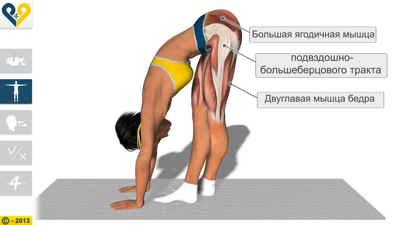 диетолог агафонов