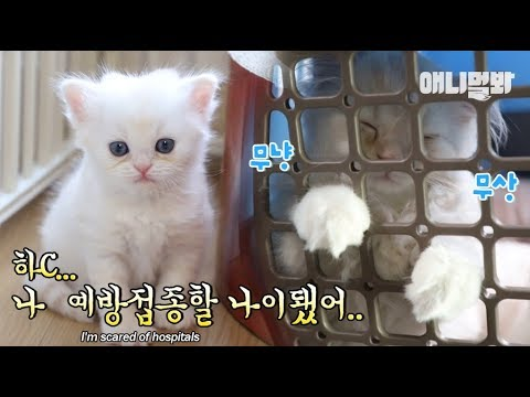 Cats get a shot for the first time ever..and show an unexpected reaction? LOL