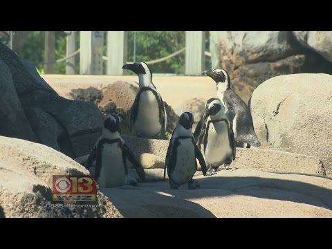 National Aquarium, Maryland Zoo Receive Top National Honors